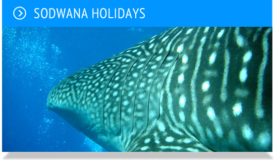 Sodwannaholidays