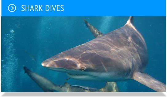 sharksdives